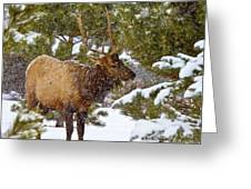 Winter Quest Greeting Card