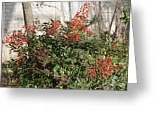 Winter Red Berries Greeting Card