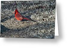 Winter Redbird Greeting Card