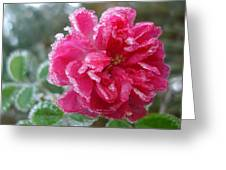 Winter Rose Greeting Card