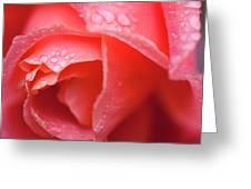 Winter Rose Three Greeting Card