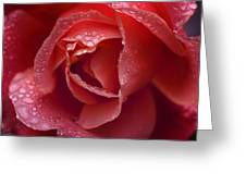 Winter Rose Two Greeting Card