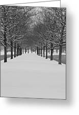 Winter Rows Greeting Card
