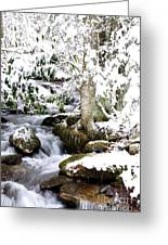 Winter Rushing Stream Greeting Card