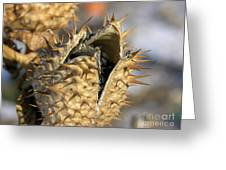 Winter Seed Pod Greeting Card