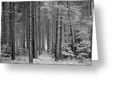 Winter, Slaley Woods Greeting Card
