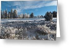 Winter Snow At Kenosha Pass Greeting Card