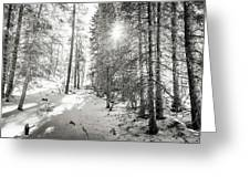 Winter Sunshine Forest Shades Of Gray Greeting Card