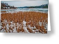 Winter Swamp Greeting Card