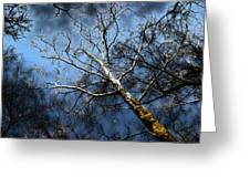 Winter Sycamore Greeting Card