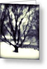 Winter Tree 3 Greeting Card