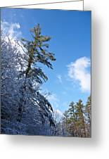 Winter Tree And Sky Greeting Card