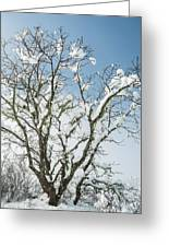Winter Tree At Berry Summit Greeting Card