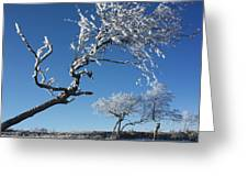 Winter Tree. Greeting Card by Bernard Jaubert