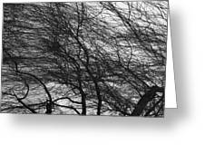 Winter Tree Branches Greeting Card