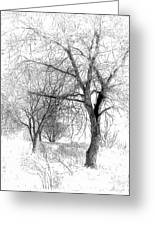 Winter Tree In Field Of Snow Sketch Greeting Card by Randy Steele