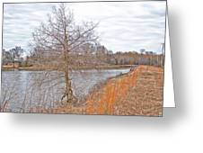 Winter Tree On Pond Shore Greeting Card