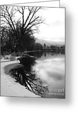 Winter Tree Reflection - Black And White Greeting Card