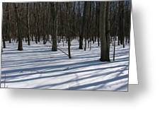 Winter Trees In Snow With Shadow Lines Greeting Card