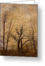 Winter Trees In The Bottomlands 2 Greeting Card