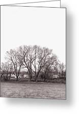 Winter Trees Monochrome Greeting Card