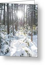 Winter Under The Sun Greeting Card