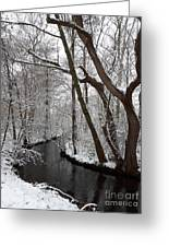 Winter Walk In The Woods Greeting Card