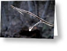 Winter Web. Greeting Card