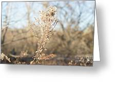 Winter Weeds Greeting Card