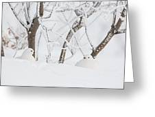 Winter Whites Greeting Card