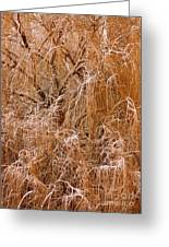 Winter Willow Branches Greeting Card