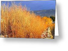 Winter Willows Greeting Card