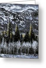 Winter Woods Greeting Card