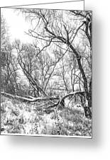 Winter Woods On A Stormy Day 2 Bw Greeting Card