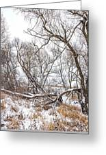 Winter Woods On A Stormy Day 2 Greeting Card