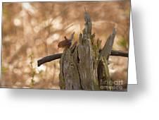 Winter Wren Greeting Card