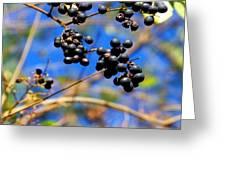 Winterberries II Greeting Card