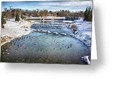 Wintering Geese Greeting Card