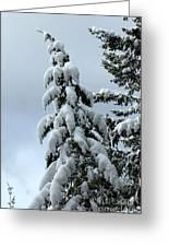 Winter's Burden Greeting Card