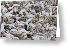 Winter's Contrast Greeting Card by Carol Groenen