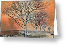 Winter's Dawn Greeting Card