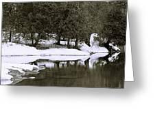 Winter's Edge Greeting Card