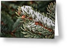 Winter's Fling Greeting Card
