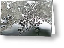 Winter's Glory Greeting Card