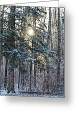 Winter's Midday Light Greeting Card