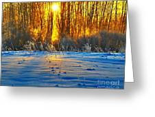 Winters Morning Greeting Card