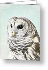Winters Owl, Barred Hoot Owl Winter Snow Falling Greeting Card