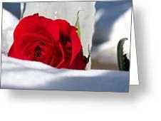 Winters Rose Greeting Card