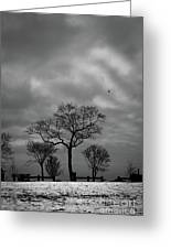 Winter's Trees  Greeting Card