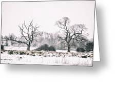 Wintery Morning Greeting Card